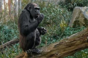 Affenarten