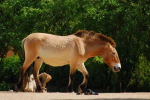 Pferdearten